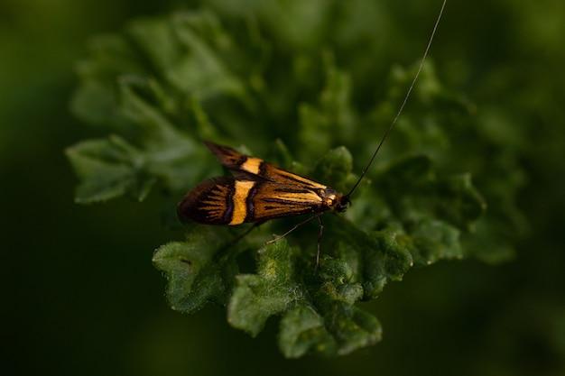 Nahaufnahmeaufnahme eines orange und schwarzen insekts, das auf einem grünen blatt sitzt