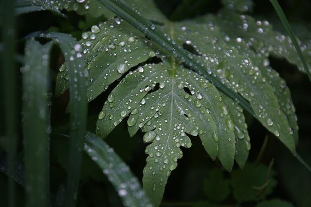 Nahaufnahmeaufnahme eines schönen grünen blattes bedeckt mit tautropfen am frühen morgen
