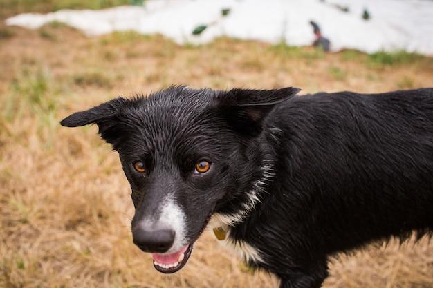 Nahaufnahmeaufnahme eines schwarzen hundes in einem feld unter dem sonnenlicht am tag