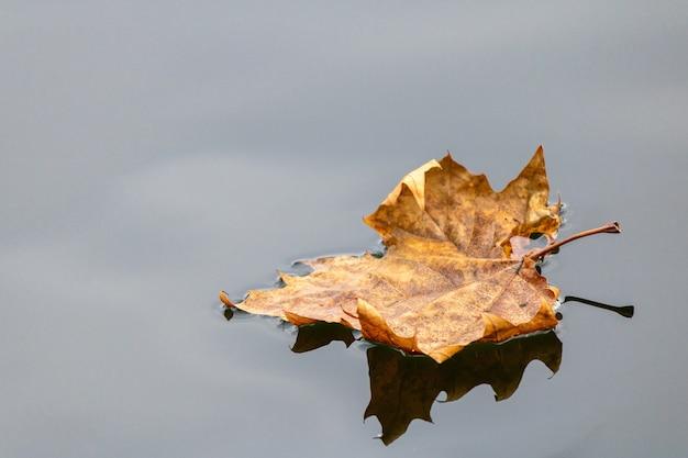 Nahaufnahmeaufnahme eines trockenen herbstblattes, das auf wasser schwimmt