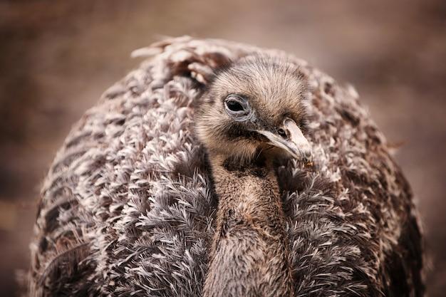 Nahaufnahmeaufnahme eines vogels, der vorne schaut