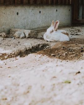 Nahaufnahmeaufnahme eines weißen kaninchens, das auf einer betonoberfläche in einer scheune liegt