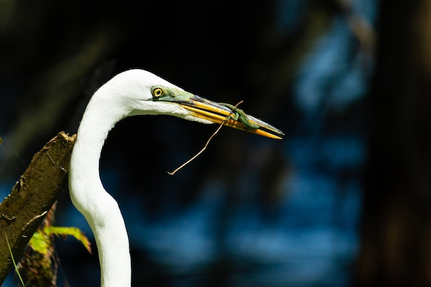 Nahaufnahmeaufnahme eines weißen storchs, der einen frosch isst