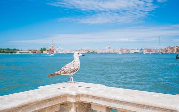 Nahaufnahmeaufnahme eines weißen vogels, der auf einem marmorzaun in venedig, italien sitzt