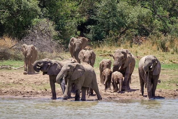 Nahaufnahmeaufnahme von elefanten, die sich dem see mit bäumen nähern