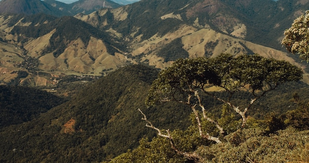Nahaufnahmeaufnahme von großen bäumen auf einem hügel, der von bergen in rio de janeiro umgeben ist