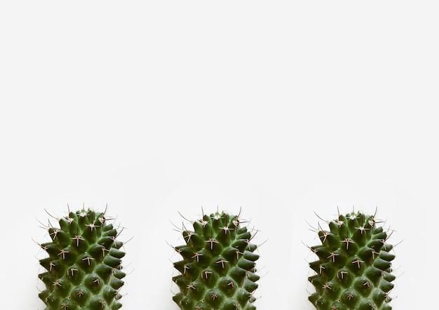 Nahaufnahmeaufnahme von kaktuspflanzen lokalisiert auf einem weißen hintergrund