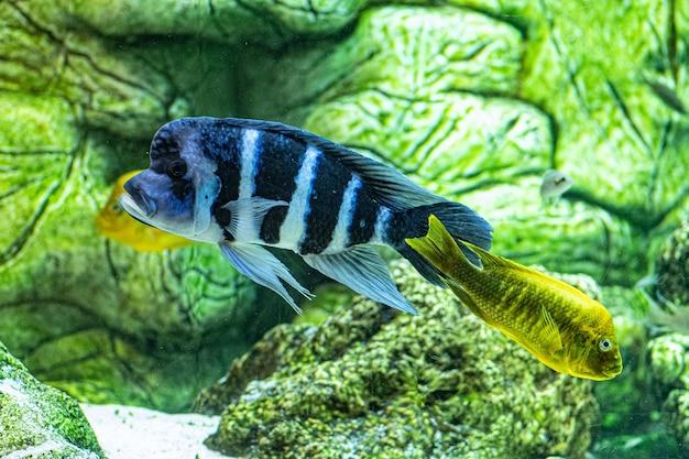 Nahaufnahmeaufnahme von korallenrifffischen, die im aquarium schwimmen