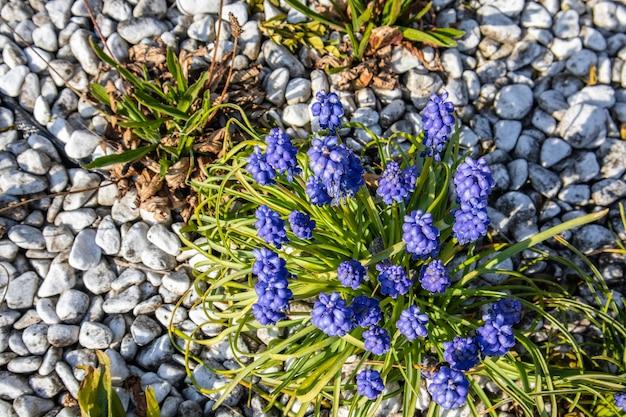 Nahaufnahmeaufnahme von lila blumen mit grün und steinen