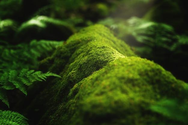 Nahaufnahmeaufnahme von moos und pflanzen, die auf einem baumast im wald wachsen