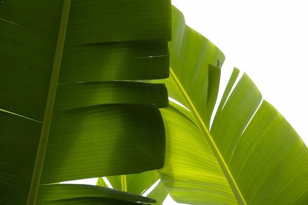 Nahaufnahmeaufnahme von tropischen grünen pflanzen mit einem weißen hintergrund