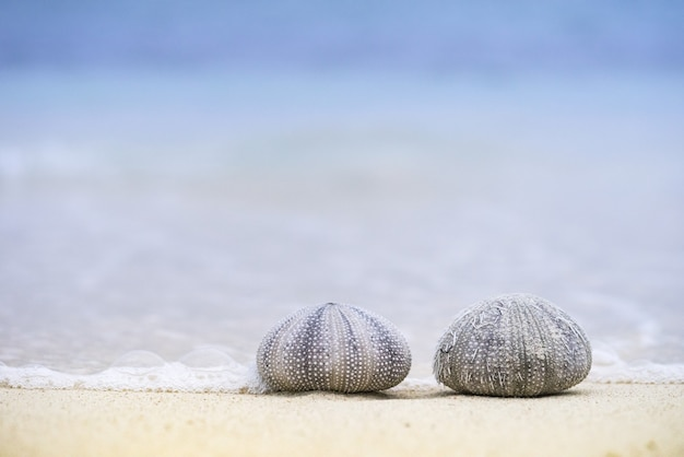 Nahaufnahmeaufnahme von zwei seeigeln am strand an einem sonnigen tag