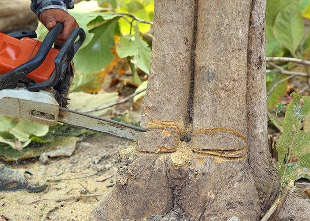 Nahaufnahmeausschnittbaum mit kettensäge.
