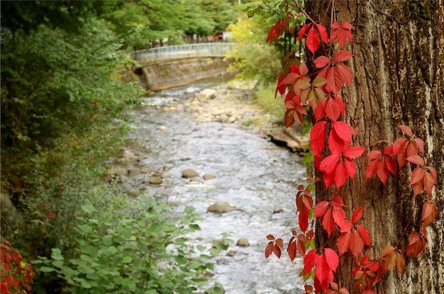 Nahaufnahmebaumstamm mit roten herbstweihnachtsfarbblättern