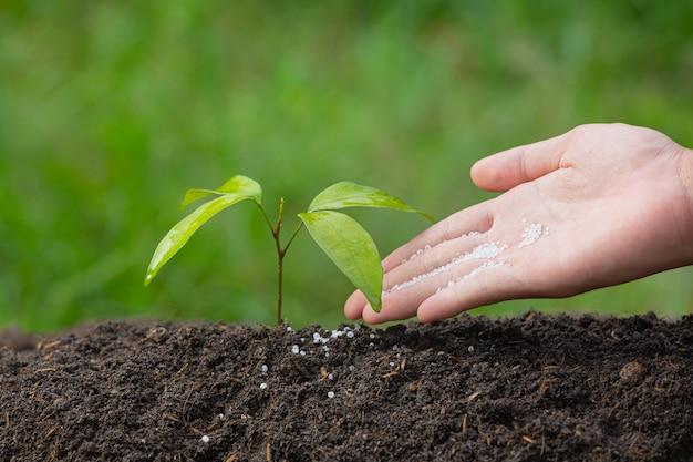 Nahaufnahmebild der hand, die den schössling der pflanze pflanzend hält
