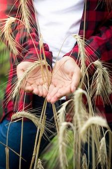 Nahaufnahmebild der jungen bäuerin, die reife weizenähren in den händen hält