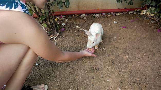 Nahaufnahmebild der jungen frau, die weißes kaninchen von der hand füttert