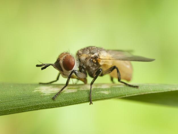 Nahaufnahmebild einer fliege auf einem blatt