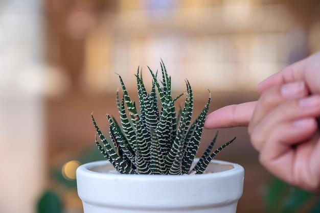 Nahaufnahmebild eines fingers, der kaktus in einem weißen topf mit unschärfehintergrund berührt