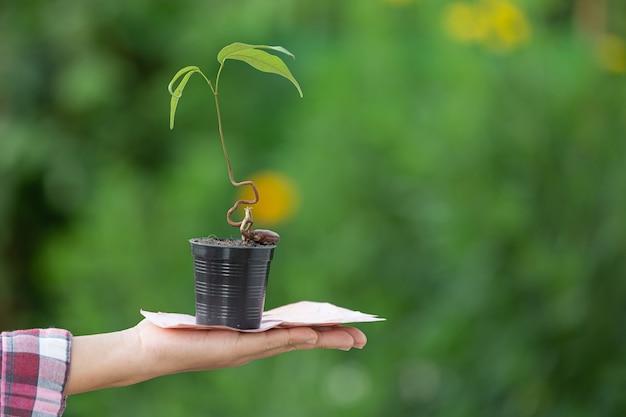 Nahaufnahmebild eines topfes der pflanze und des geldes, das zur hand gelegt wird
