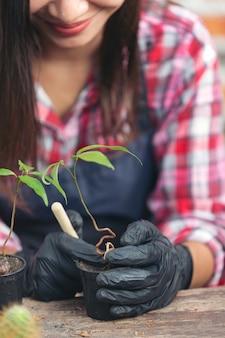Nahaufnahmebild von gardener's hands planting plant