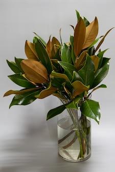 Nahaufnahmebouquet von frischen grünen und braunen magnolienblättern in der glasflasche