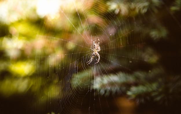 Nahaufnahmefoto der großen spinne, die auf dem netz im herbstwald sitzt