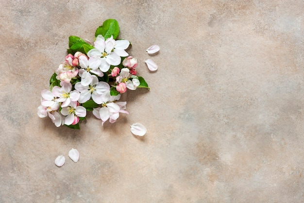 Nahaufnahmefoto der schönen weißen blühenden apfelbaumzweige.