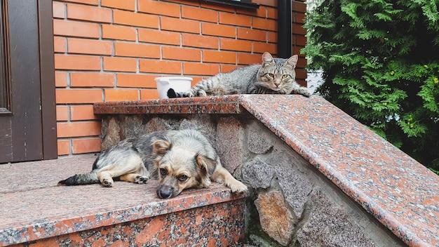 Nahaufnahmefoto des süßen hundes und der katze, die auf der veranda am großen haus liegen