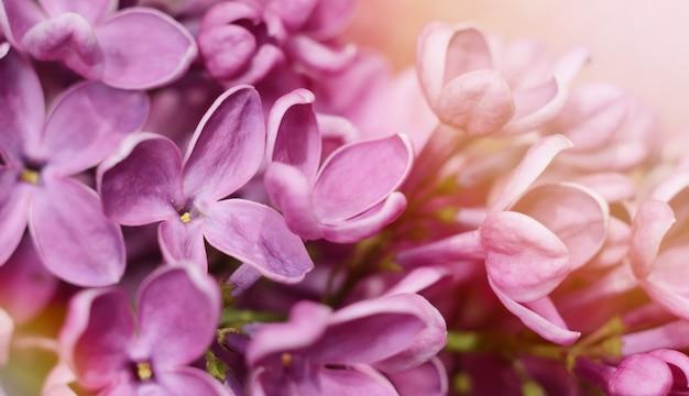 Nahaufnahmefoto von schönen lila blumen.