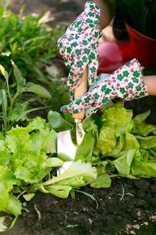 Nahaufnahmefrau, die im garten auf frischem organischem salatbett arbeitet working