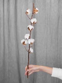 Nahaufnahmefrau, die zweig mit baumwollblumen hält