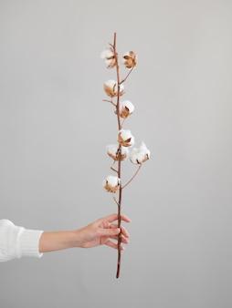 Nahaufnahmefrau mit zweig mit baumwollblumen