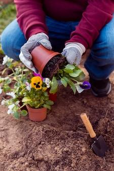 Nahaufnahmegärtner, der blumen im boden pflanzt
