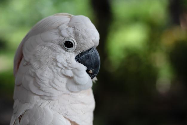 Nahaufnahmegesicht des weißen macore vogels, undeutliches licht herum