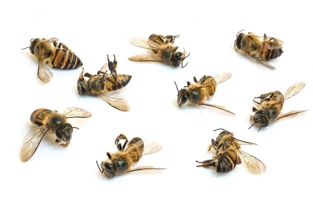 Nahaufnahmegruppe der toten biene lokalisiert auf weiß