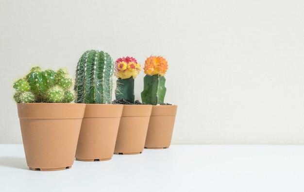 Nahaufnahmegruppe des schönen kaktus im braunen plastiktopf für verzieren auf unscharfem weißem hölzernem schreibtisch