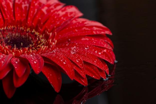 Nahaufnahmehälfte von blumenblumenblättern