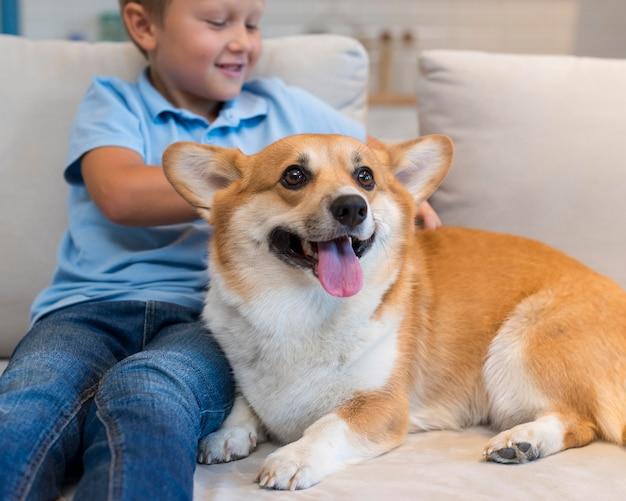 Nahaufnahmejunge, der familienhund streichelt