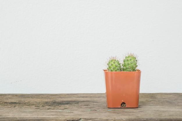 Nahaufnahmekaktus im braunen plastiktopf auf hölzernem schreibtisch und weißzement ummauern hintergrund