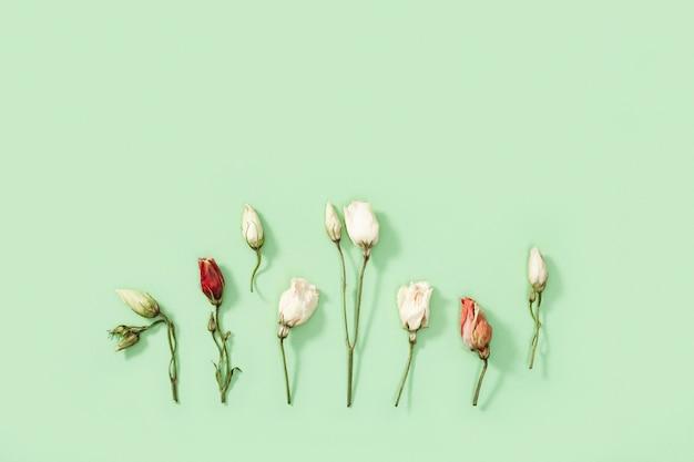 Nahaufnahmeknospe der trockenen blume, der blätter und der blütenblätter auf grün. natürlicher blumiger hintergrund.