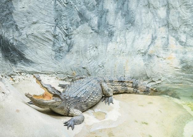 Nahaufnahmekrokodilschlaf im alligatorteich am strukturierten hintergrund des zoos
