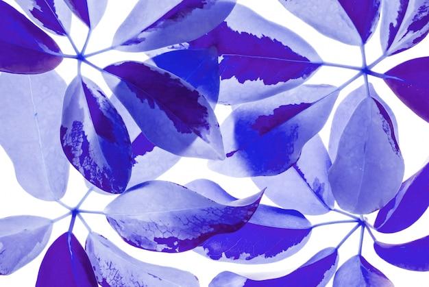 Nahaufnahmekunstton von den frischen blauen blättern lokalisiert auf weißem hintergrund