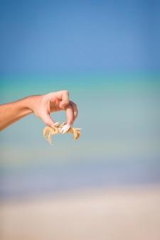 Nahaufnahmelivekrabbe am weißen strand