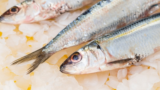 Nahaufnahmemakrelenfische auf eiswürfeln