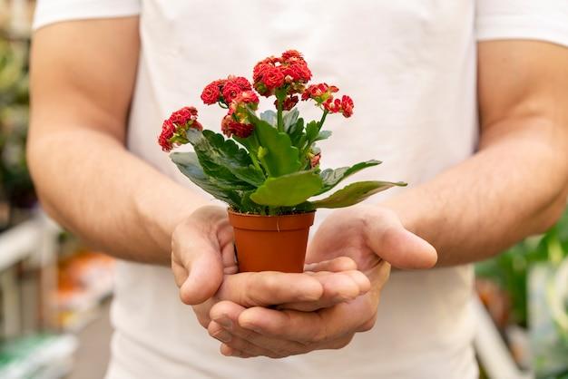 Nahaufnahmemann, der elegante zimmerpflanze hält