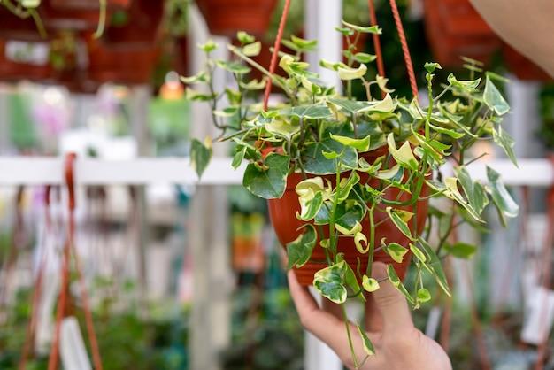 Nahaufnahmemann, der hauspflanze hält