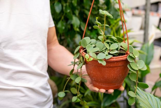 Nahaufnahmemann, der kleine zimmerpflanze hält