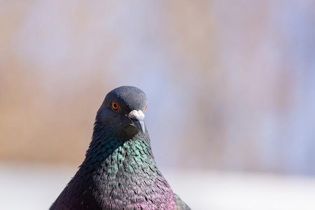 Nahaufnahmen von vögeln