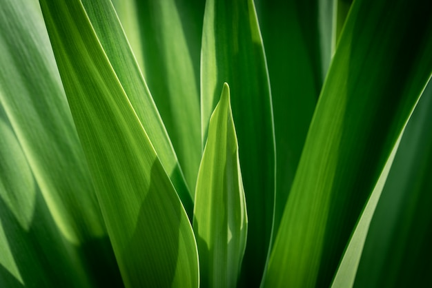 Nahaufnahmenaturansicht des grünen blattes auf unscharfem grün